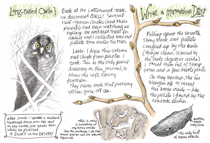 Ideas - Nature Journal Project